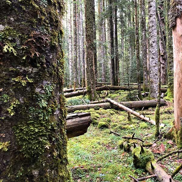 Bosques de Ordesa